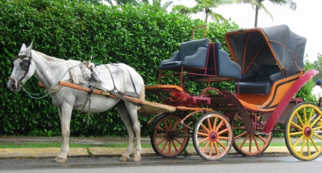 Do you travel in a Horse & Carriage?